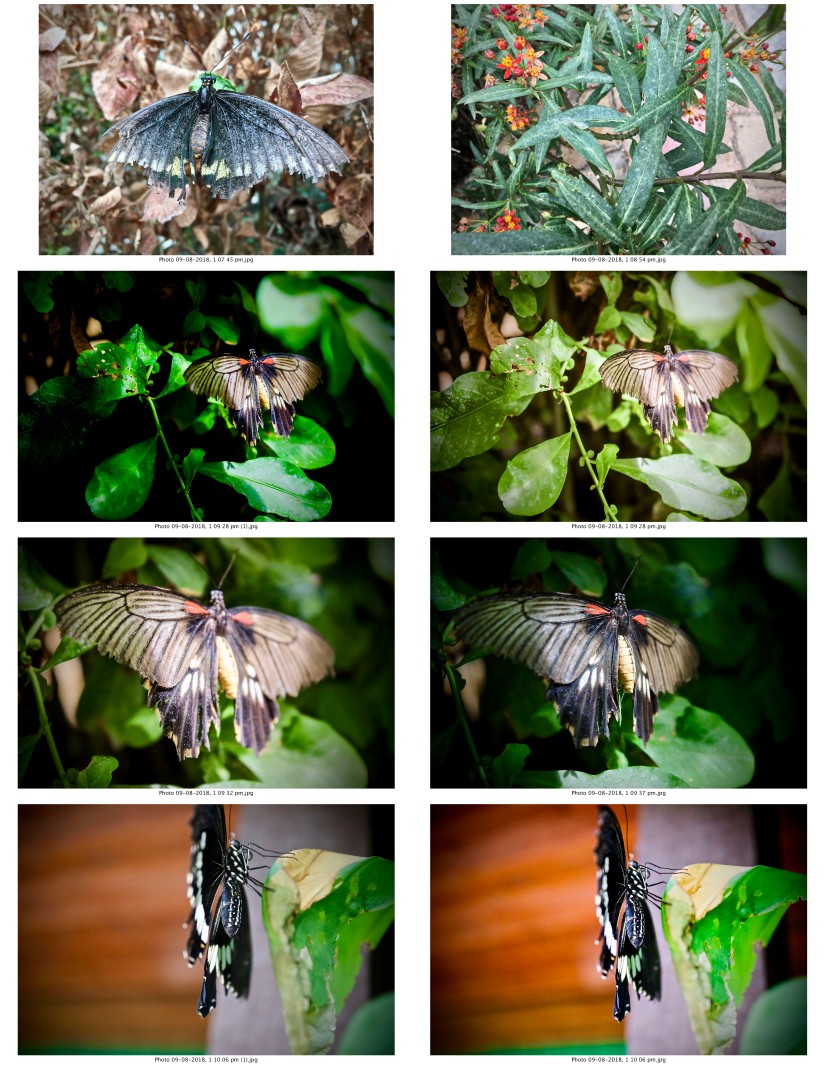 contactsheet-002-recovered.pdf butterflys part 5