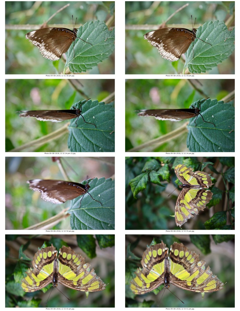 contactsheet-068.pdf butterflys part 5